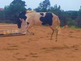 Oskar jumping with joy