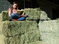 reading in the hay